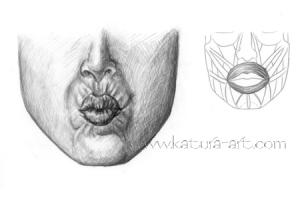 Obicularis Oris